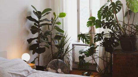 Растения в спальню