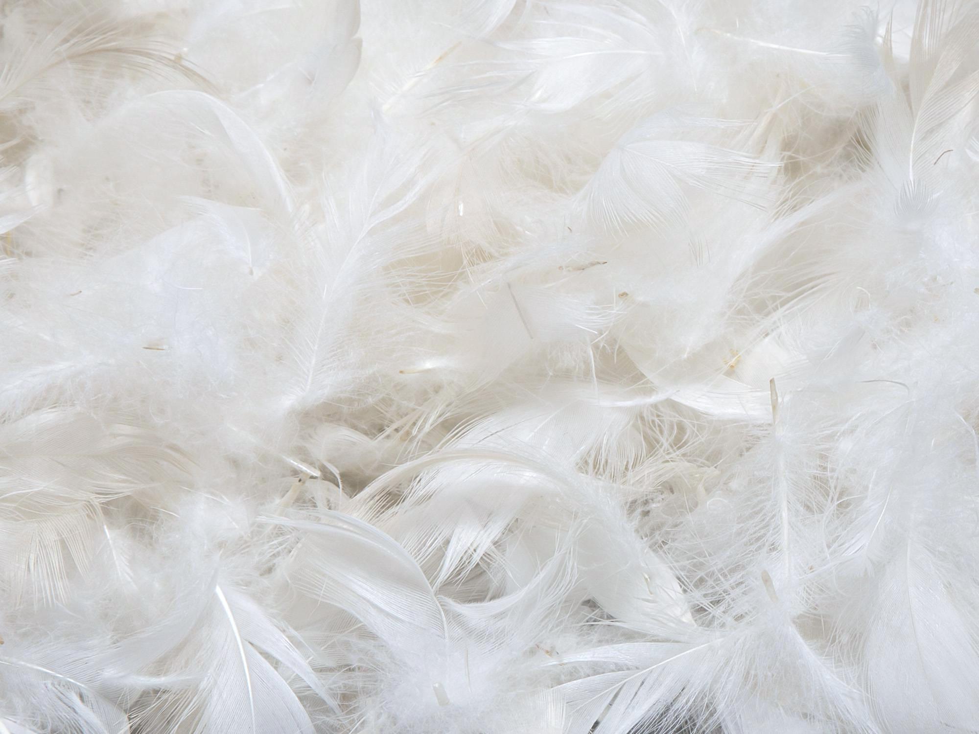 Белый гусиный пух